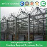 Serre chaude en verre avec la structure métallique galvanisée pour culture de fleur et de légumes