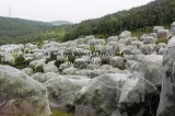 정원 곤충 그물세공 온실 모기장