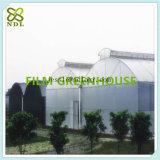 Casa verde inflada dobro de película plástica