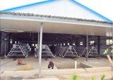 Coops van de Kooien van de Landbouw van de jonge kip Automatische Hete Apparatuur/Ondergedompeld Koud Gegalvaniseerd (een Frame van het Type)