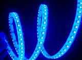 세륨 EMC LVD RoHS 보장 2 년, 유연한 SMD3528/5050 파란 색깔 LED 지구 빛