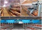 La volaille automatique de poulet mettent en cage le matériel de ferme pour la technologie de Poul de système de cage de poulet d'éleveur (type bâti de H)