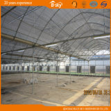 Multi-Span Film Greenhouse per Seeding Built nel Giappone