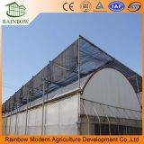 Venta directa de fábrica 150 micrones de invernadero de película resistente a los rayos UV con bajo precio