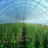 꽃 성장하고 있는을%s 대중음식점 온실을%s 온실
