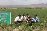 inserimento di pomodoro di 70g*50 22%-24%