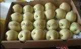 Pear fresco/Fruits cinese di Highquality (36.40.44.48)