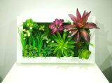 Piante e fiori artificiali della pianta succulente Gu-SD-15132