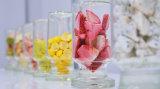 Essiccatore di gelata di vuoto dell'alimento di alta qualità