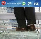 Couche dans des cages de batterie de l'Algérie pour les pondeuses (A4L160)