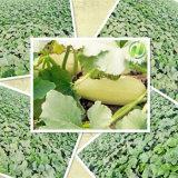 Biokost-organische Kürbis-Startwert- für Zufallsgeneratorkerne AA
