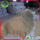 乾燥されたソラマメか使用できる空豆今
