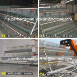 Chicken automatico Cage Poultry Equipment per Layer