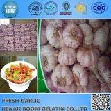 L'aglio fresco in Cina ora pota la vendita calda dell'aglio