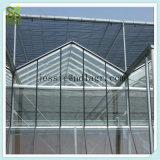 식물성 성장하고 있는을%s 편평한 명확한 강화 유리 녹색 집
