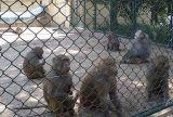 低価格の高品質の動物のチェーン・リンクの塀