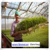 Estufa agricultural da folha do PC da Multi-Extensão para o pepino