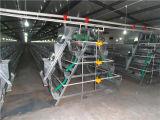 Gaiola quente da galinha da venda com boa qualidade em África ISO9001