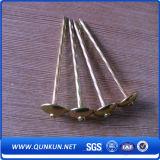 電流を通されるQ195 Bwg3-20の明るいポーランド語Anping Factroyからの釘に屋根を付ける