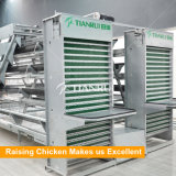 Cage automatique de poulet pour la ferme de volaille en Indonésie