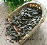 Crecido sin núcleos del germen de calabaza del shell