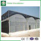 Multi serra della pellicola della portata di agricoltura per le piante