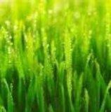 Zitrone-Gras-Schmieröl