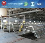 Equipo de las aves de corral de la granja de Malasia de la jaula del pollo de la fábrica de China