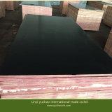 La película de la base del álamo hizo frente a la madera contrachapada para la mejor calidad de la construcción