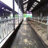 Luz prefabricada de acero Marcos Vaca Caballo Barns en Venta