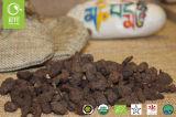 Potentilla organico Anserina secco con efficace valore medico