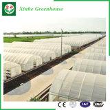 Agricoltura/serra commerciale del traforo del film di materia plastica per la fragola/Rosa
