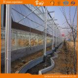 Portata di lunga vita della serra della lamiera sottile del policarbonato