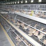 Оборудование клетки цыпленка курочки высокого качества (тип)