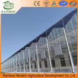 Sistemas de control climático de alta calidad Agricultura Glass Venlo Greenhouse