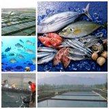 bio agent de traitement de l'eau pour aquatique
