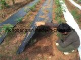 زراعة حديقة إستعمال  يحاك بناء