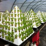 Invernadero Growing de cristal para el hidrocultivo