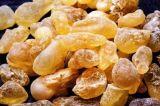 Extracto de Serrata del Boswellia de los ácidos el 65% de Boswellic para los desordenes reumáticos