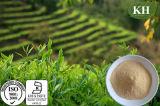 Анти--Oxidiant выдержка чая полифенолов 80% Oolong чая