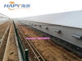 Edificio de acero de la construcción con la instalación y el equipo para el pollo