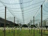 Сеть окликом зальбанда Италии анти-/сеть окликом черноты анти- для земледелия, сети системы окликом