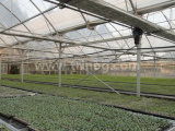 EU 모형 다 경간 필름 농업 온실 1 (EU9600-5060NV)