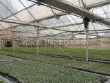 EUのモデルマルチスパンのフィルムの農業の温室