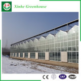 PC Blatt-Gewächshaus mit Wasserkultursystem für Gemüse