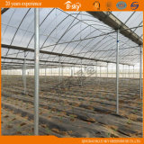 Vegetable GrowingのためのベストセラーのCommercialマルチSpan Plastic Film Greenhouse
