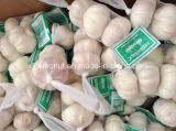 Karton van het Knoflook 3p/10kg van China het Normale Witte (5.05.56.0cm)