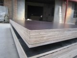 Wholesale Products Brown Film Faced Plywood/Shuttering Plywood
