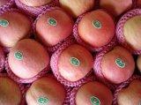 Fábrica fresca de FUJI Apple de la nueva cosecha 2016