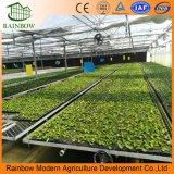 Multi-Span Venlo Vidrio Materila que cubre el invernadero de la fábrica de China